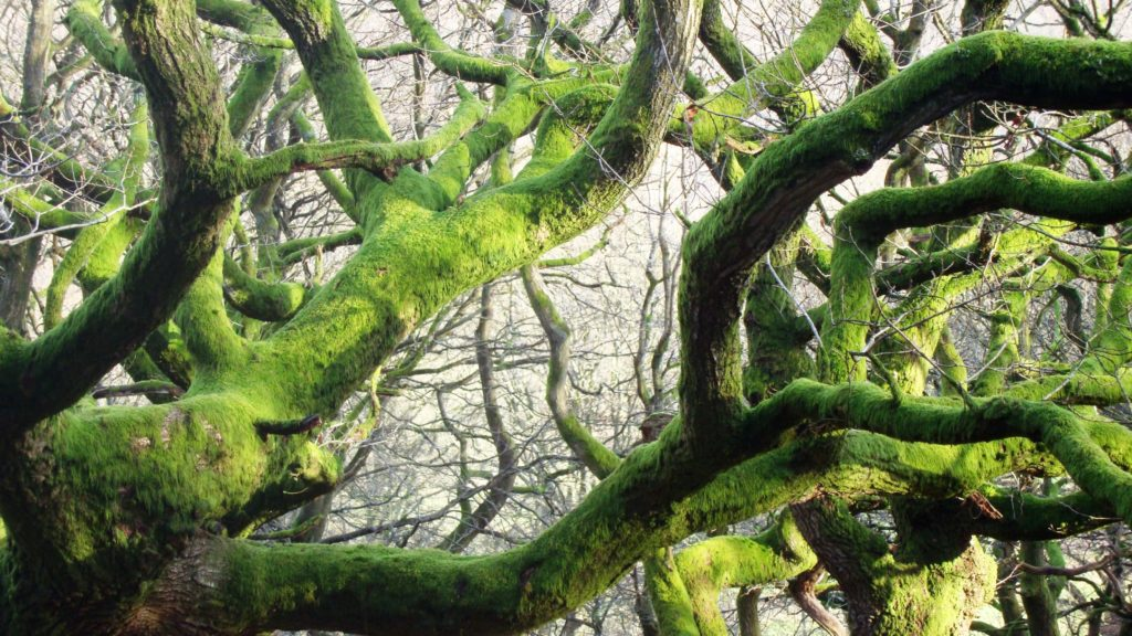 twisted oaks about us at porth-y-parc